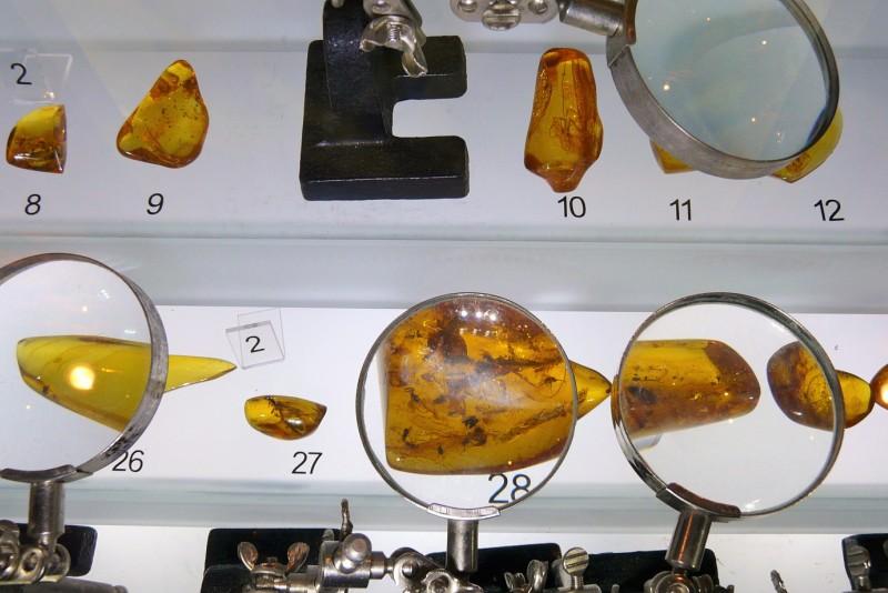 Fossil i Östersjöns bärnsten, Bärnstensmuseum
