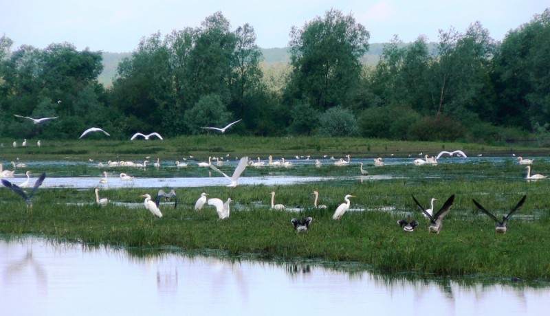 Fåglar på ett våtmarksområde vid floden Postomia. Fågelobservationer i Polen - Hit The Road Travel
