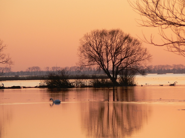 Våtmarksområde vintertid