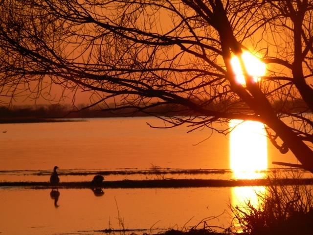 Solnedång över Wartadeltat. Fågelobservationer i Polen - Hit The Road Travel